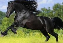 HORSES / by Bette Cline