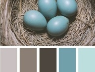 Paint Colors to Love
