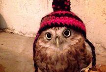 Owl  フクロウ(๑°꒵°๑)・*♡