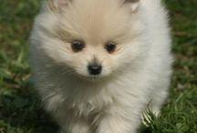 Štěňátka a pejsci (puppy and dogs)
