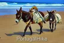 Donkeys in the Algarve