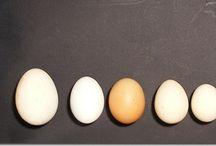 Uovo Perfetto / La scienza della cottura dell'uovo