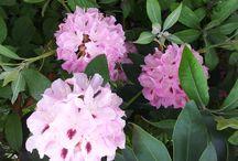 Meine Ruhe im Garten / Es gibt doch nichts Schöneres vom Alltag abzuschalten, als in der Natur. Ein Streicheln der blühenden Sträucher, die Farbenpracht der Blumen einatmen und man vergisst den Alltagsstress..