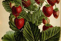 фрукты,ягоды,овощи