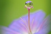 Drops / Magic nature