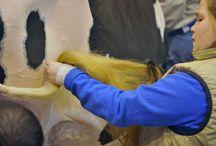 Salon International de l'Agriculture - Journée du 22 février