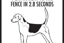 English Foxhound Signs and Pictures / Warning and Caution English Foxhound Dog Signs. https://www.signswithanattitude.com/english-foxhound-signs.html