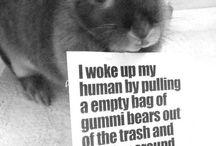 All things bunny / Ze bunnehs