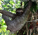 Slowly smiling sloths! / by Austin Richell
