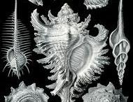{create} Ernst Haeckel mood board [World of Wearable Art] / by Desiree Goodall