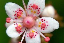 Çiçek Türleri
