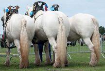 Draft Horses in General