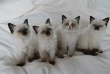 fotos gatos / by Alejandra Maria Abella Parietti