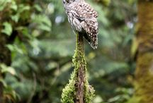 Owls / Owls Photographed by Steve Lenz