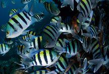 Breeding Fish / by Tropical Fish Hobbyist Magazine