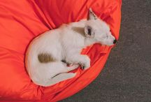 Instagram Покупай, блин, лежаки собаке
