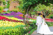 Okinawa wedding story