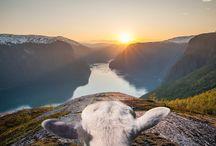 #SheepWithAView / Lerne eine Gruppe wollener und sehr eigensinniger Schafe aus Norwegen kennen und entdecke mit ihnen die schönsten Plätze des Landes. Du kannst Frida, Erik, Kari, Lars und Heidi in den nächsten Wochen auf Schritt und Tritt folgen. Auf Facebook, auf Instagram: bit.ly/SheepWithAView und natürlich auf diesem Pinterest-Board! https://www.visitnorway.com/sheepwithaview/