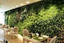 green.wall