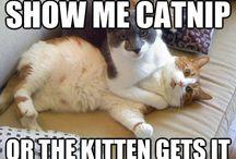 Cats,Cats,Cats...