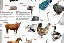 lдомашние животные