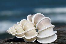 Sea Shells / by Tina Johnson