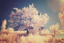 Dreamy Landscapes / by Ryan Lynch