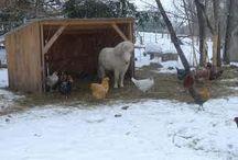 Horse sheds