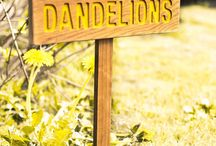 ~ dandelion wishes ~ / by Michele. Sharp Mauger