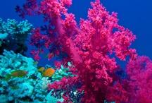 Sea and beautiful