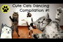 Funny Cat and Dog Videos / Yuhuu this board is exclusively for cute cats and dogs featuring sweet kittens and puppies compilation videos and other funny animal captures. ♫