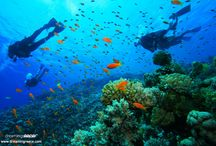 """Scuba Diving in Greece / If you are sea lovers and wish to combine your holidays with activities such as diving get ready to experience exciting and unique surprises! In almost every """"corner"""" of Greece, you will find specialized centers which will introduce you to the secrets of diving, whether you are a beginner or a pro. Colorful corals, sea anemones, sponges, shellfish, rare species of fish, sunken cities and forgotten shipwrecks are waiting to take you to a magical world!"""