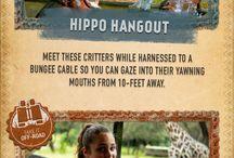 Experiencias en Disney World / Tours y Experiencias en Disney Animal Kingdom...