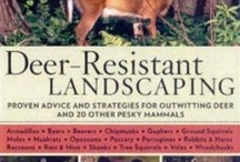 Great Garden Books / Advice and inspiration from other gardeners