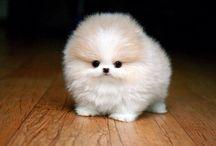 Dog ideas / I want these sweet pups!!