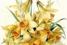 Flowers / Иллюстрации цветов и букетов