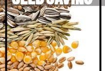 Seeds saved & garden ideas