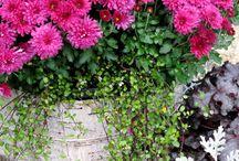 Gardening / by Stacy Sudberry