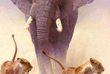 Dierenwereld / Een dierenwereld