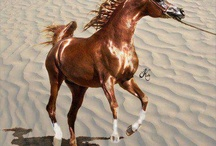 Horses / Pferde / Atlar / Please Like and Pin ! Thank you