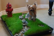 Pratique petits chiens