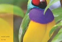 TRAVELHOST of Fort Worth / #1 Travel & Destination Magazine for Fort Worth Texas / by TravelHost