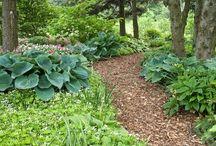 Amy Garden