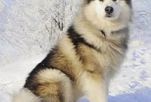 My dream dog<3<3<3