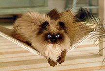Kitties & Pets / Things I see for my cats, my birds, or my mom's dogs.  / by Meagan Nyland