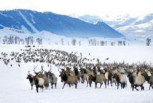 Our Partners / Bridger Teton National Forest. The National Elk Refuge
