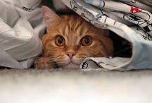 Cats / by Danielle H da Mata