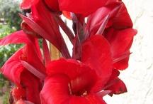 Gardening/Flowers n' stuff / by Kristen Pelura