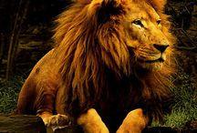 Lion / by The Burmese Falcon