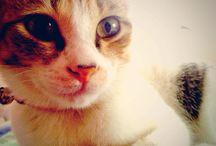 my cat♥︎ / ウチの猫♡愛猫♡hana
